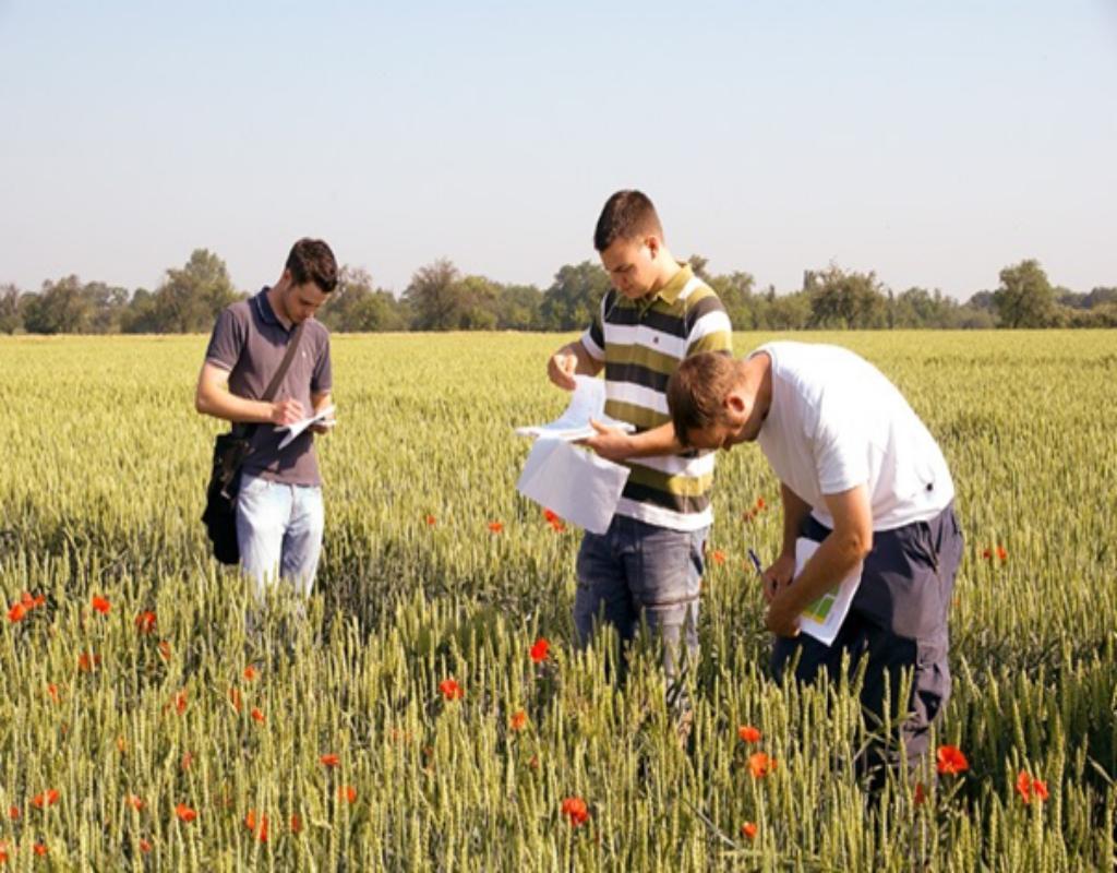 Trong nông nghiệp đất là một yếu tố đóng vai trò vô cùng quan trọng.